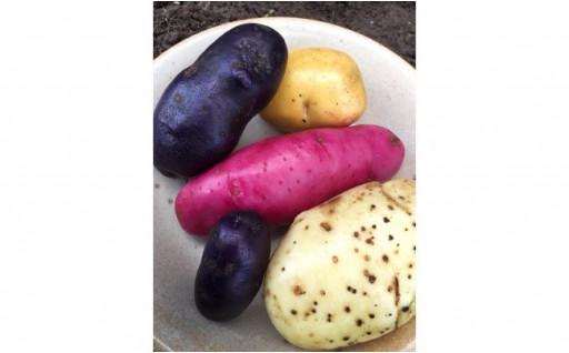 色彩豊か!北海道産6種のじゃがいも食べ比べセット