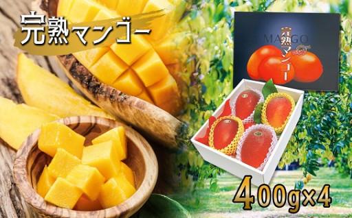 熊本玉名産 完熟マンゴー(約400g×4玉)