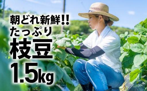 朝どれ新鮮!夏の味覚「枝豆」たっぷり1.5㎏