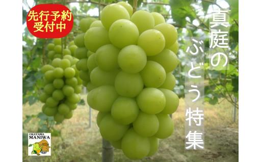 【毎年人気です!】真庭のぶどう先行予約受付中!!