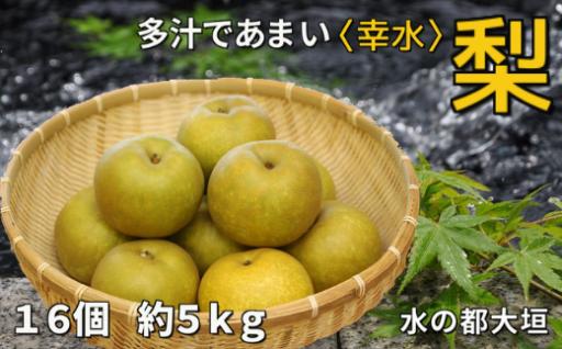 多汁であま~い大垣の梨〔幸水〕5kg