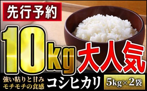 【先行予約】令和2年度産 コシヒカリ 10kg