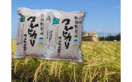 新米予約!特別栽培米コシヒカリ2㎏×2袋×6ヵ月