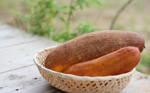 島の夏野菜「赤毛うり」今が旬です!!