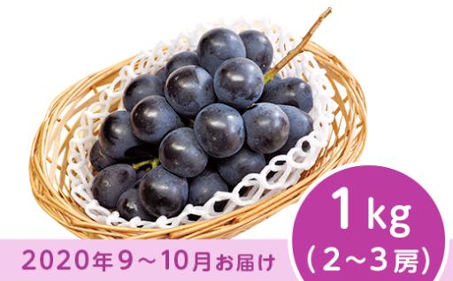 【9月以降出荷予約】ナガノパープル1kg