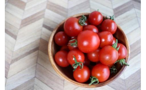 RICOTOMATOに完熟ミニトマトも登場!