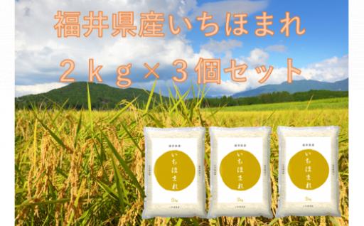 8月発送分「福井県産いちほまれ」2kg×3