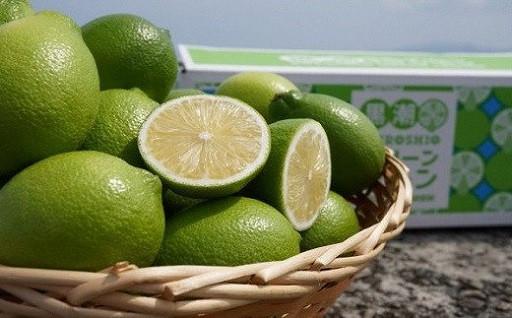 フレッシュな香り!黒潮町産 温室グリーンレモン