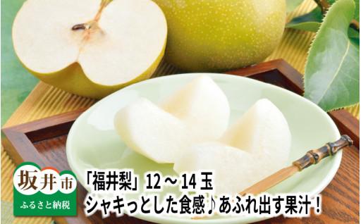 「福井梨」12~14玉入り!シャキっとした食感♪