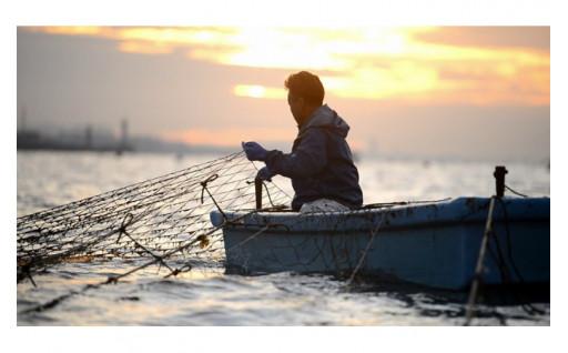 加古川漁師のこだわり海苔特集