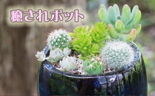 ミニサボテン&ミニ多肉植物の癒されポット