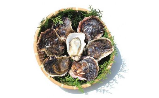 【受付終了間近!】岩牡蠣 受付期間8月10日まで