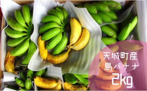 【鹿児島県天城町】徳之島子宝バナナ 2kg