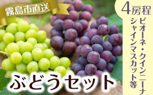 ぶどうセットB!旬の葡萄詰め合わせ約3kg!