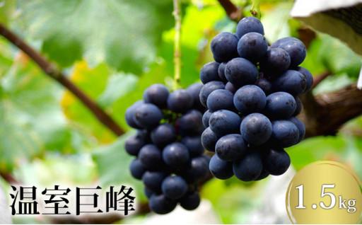 【8月31日受付終了!】阿部ぶどう園・温室巨峰