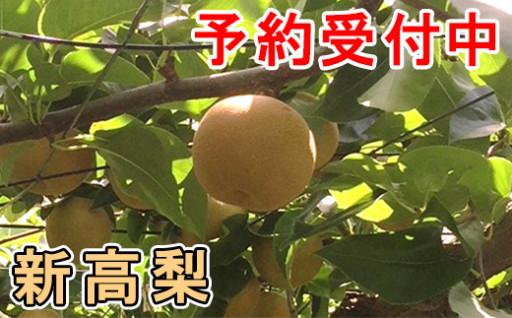 この季節のお楽しみ 爽やかな甘さ広がる「新高梨」