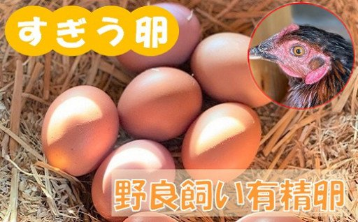 野良飼いの鶏が産む、究極の卵を是非試してください