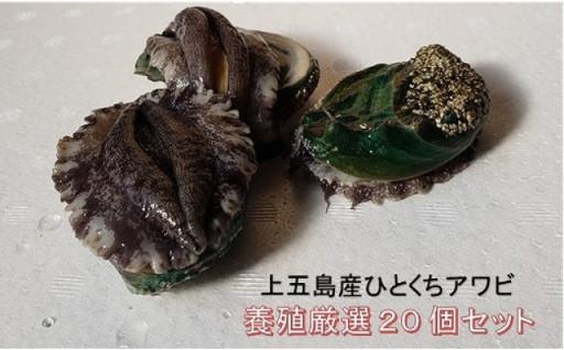 上五島産【ひとくちアワビ】