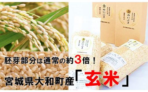 高機能玄米「金のいぶき」は白米モードで簡単炊飯!