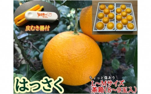 ★柑橘専業農家 南泰園から!傷ありはっさく★