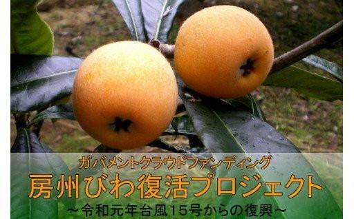 【限定びわ】台風被害から房州びわ復興プロジェクト