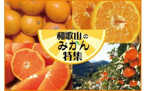 和歌山の美味しいみかん【16種類】集めました!