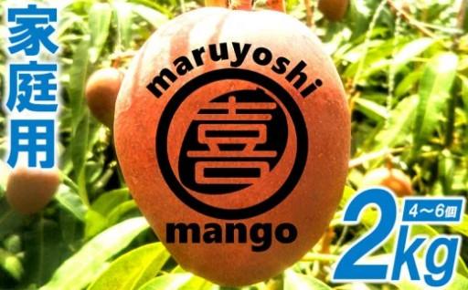 家庭用マンゴー2kgまるよし農園 2021年発送