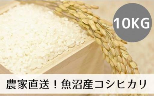 【令和2年産】農家直送コシヒカリ「山清水米」玄米