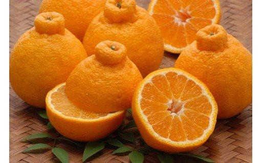 10月1日より大人気の柑橘3種の受付開始!