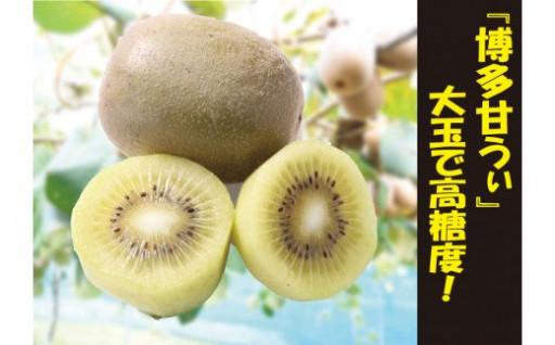 福岡県特産キウイフルーツ「博多甘うぃ」受付中!