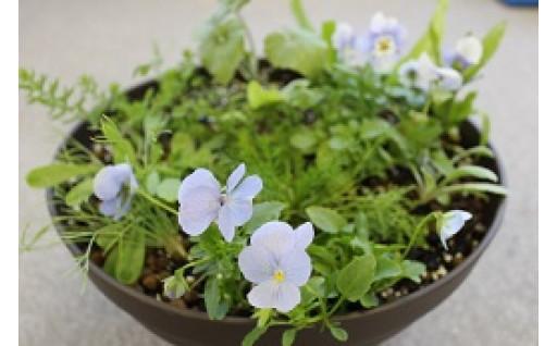『モネの庭季節の寄せ鉢』秋冬期お届け状況