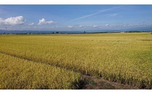 新米の季節到来!!天童のお米をお楽しみください。