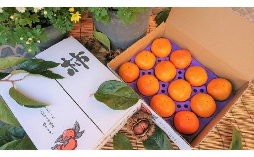 【令和2年産・先行予約】近江今津の富有柿12玉