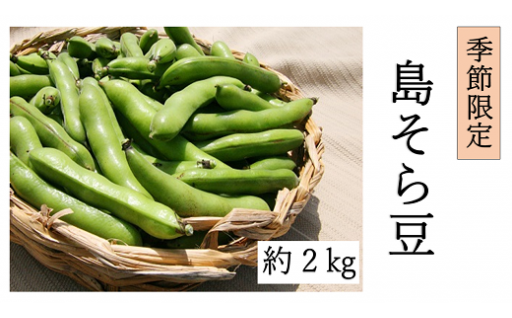 【季節限定・お値打ち品】島そら豆(約5kg)