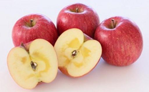 おいしいりんごの季節が、今年もやってきました♪