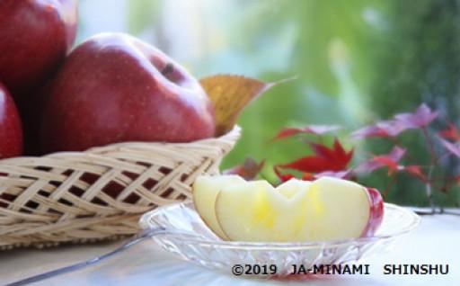 りんごの王様とも言われる秋の味覚♪サンふじ
