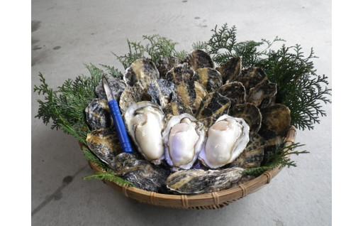 有明海の濃厚牡蠣の受付が始まりました!