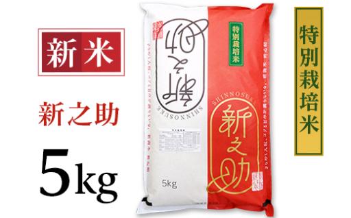 大人気です!特別栽培米 新之助 5kg