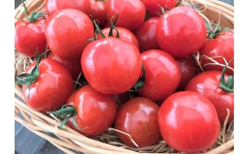 新食感!奇跡のさくらんぼトマト 1㎏