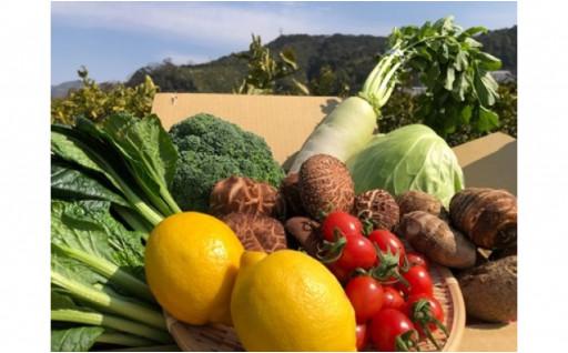 ★園主おすすめの採れたて野菜をお届けします!★