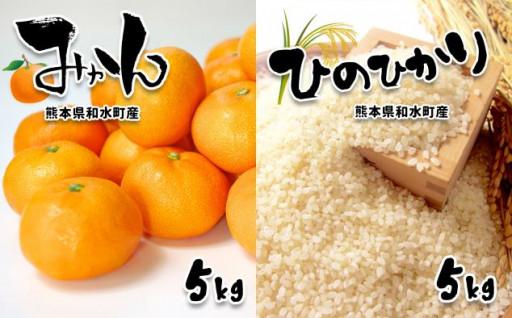 無洗米「ひのひかり」5kg+みかん5kg