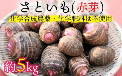 ほくほく美味しい里芋(赤芽)をたっぷり5㎏!