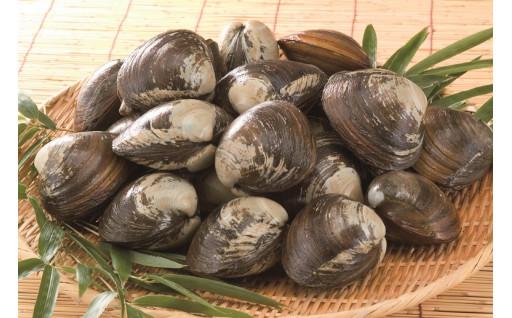 ホッキ貝漁がまもなく解禁となります。