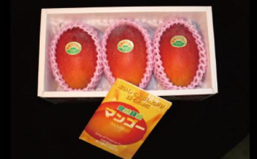 【先行予約/限定】マンゴー「鉢入り娘」化粧箱入り