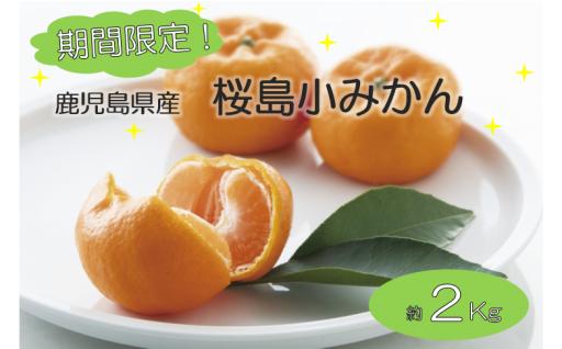 期間限定!みかんは小粒、甘さは大粒!桜島小みかん