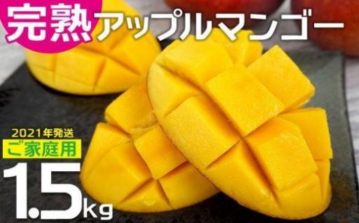 アップルマンゴー1.5kg 【2021年発送】