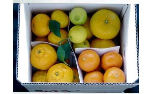 安全安心の『柑橘詰め合わせ』