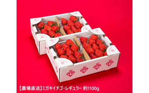 一押しの逸品「【農場直送】ミガキイチゴ」