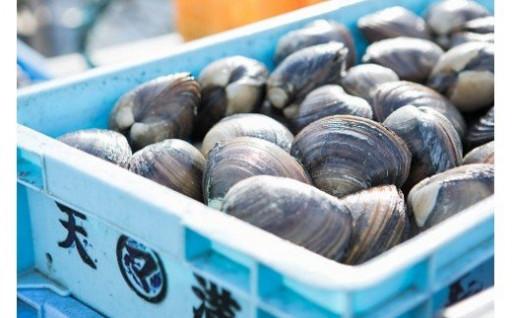 【数量・期間限定予約】漁港直送!活ほっき貝
