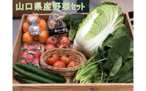 【山口県長門市】新鮮旬野菜をお届けします。